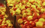 elma organik tarim saglik