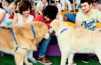 pedigree festival hayvan kopek
