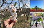 pudra bahar cicek doga pudra uygulamasi