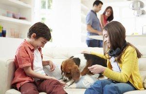 kopek beagle cocuk dost uyumlu aile ev