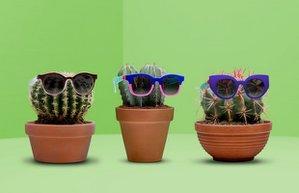 swatch 2016 ilkbahar yaz gozluk koleksiyon aksesuar