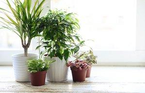 ev bitki cicek manset