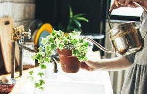 bitki ile ilgilenin