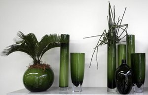 ev sus salon bitkisi