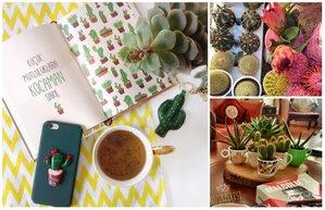 pudra uygulamasi kaktus bitki dekorasyon