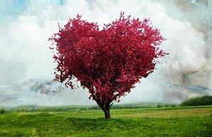 kalp doga sevgi
