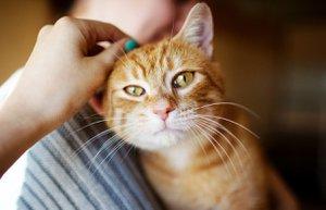 hamilelikte kedi sevmek beslemek