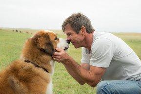 a dogs purpose fragman 2017 ocak sinema film bir kopegin amaci