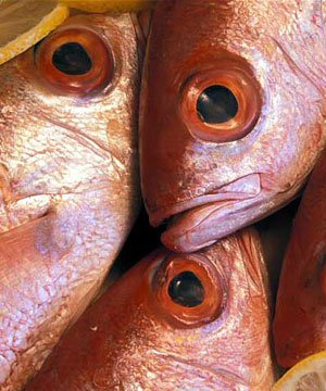 Balığın faydaları balik yemek 5 1