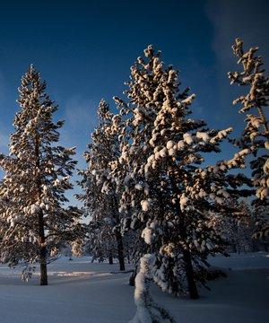 Sömestr tatili için en iyi tercih: Laponya laponya 2 3