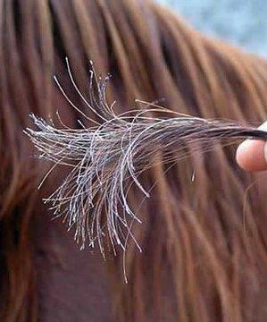 Saç kırıkları nasıl önlenir? sac 1