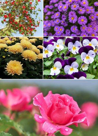 Sonbaharda çiçek açan 10 bitki