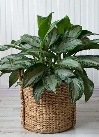 Az ışık seven bakımı kolay 6 bitki