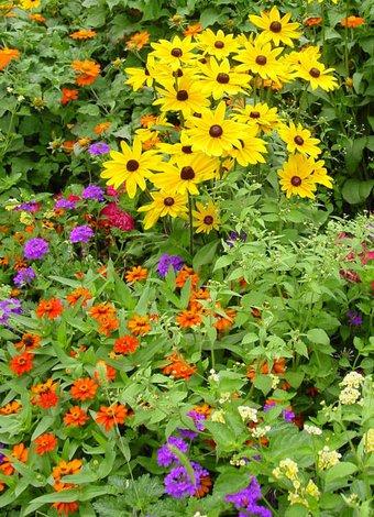 Şimdi çiçek ekin, yazın keyfini çıkarın! yaz bahce cicek 1