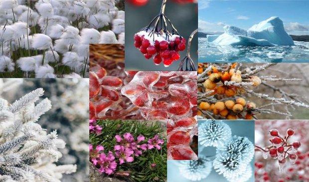 Arktik bitkilerin özellikleri