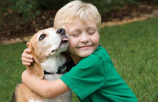 Evcil hayvanın faydaları