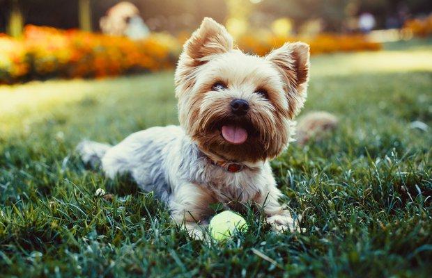 Gününüzü güzelleştirecek sevimli hayvan fotoğrafları