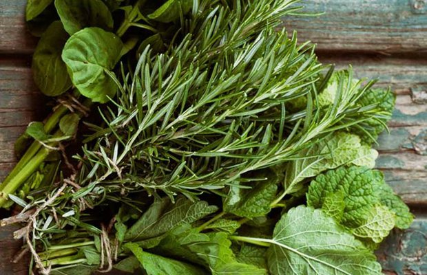 Cilde ve sağlığa dost faydalı bitkiler