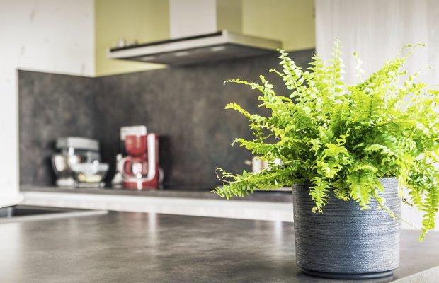 NASA açıkladı: Bu bitkiler evdeki havayı temizliyor 1