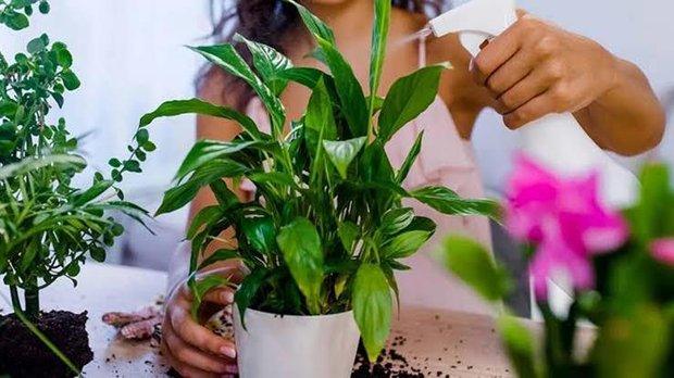 Ofis ortamında motivasyon sağlayan çiçekler