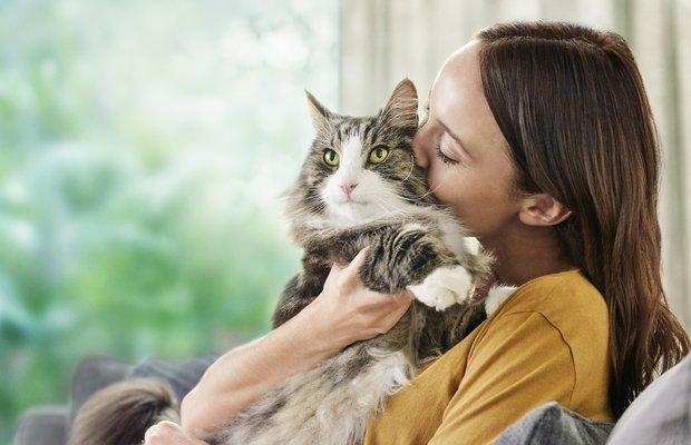 Kedi tüyünde bulunan alerjenleri azaltan mama